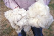 Long and short hair wool at the South Central Family Farm Research Center in Boonesville, AR