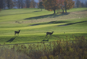 Wildlife is sometimes seen on golf courses but not encouraged due to damage it causes to the course.