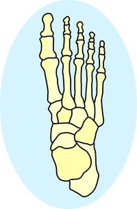 The bones in the human foot provided by Classroom Clip Art (http://classroomclipart.com)