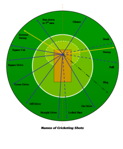 The directions in which a  intends to send the ball when playing various cricketing shots.